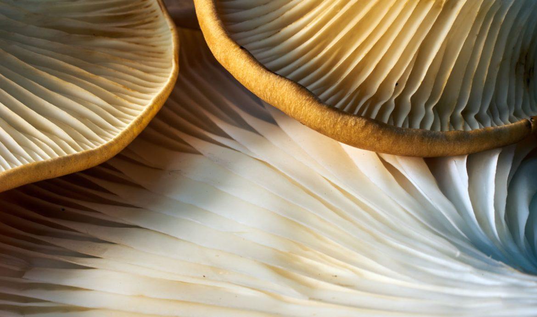 ViNatura der entscheidende Pilzshop - Bewertung